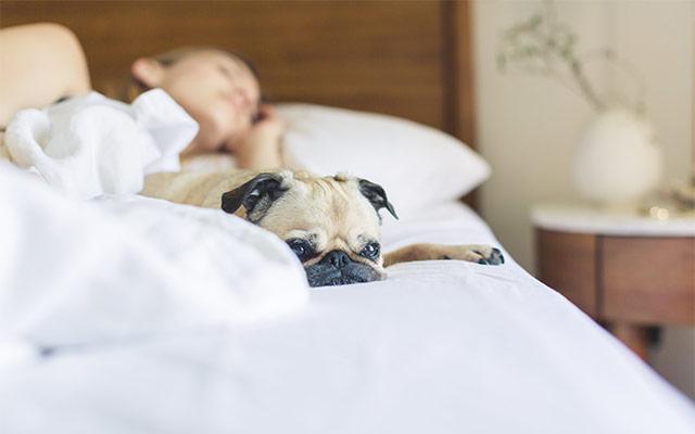 Zadosten spanec